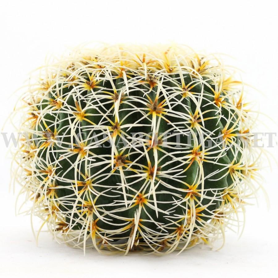 Cactus tondo pianta artificiale casabottega for Pianta cactus