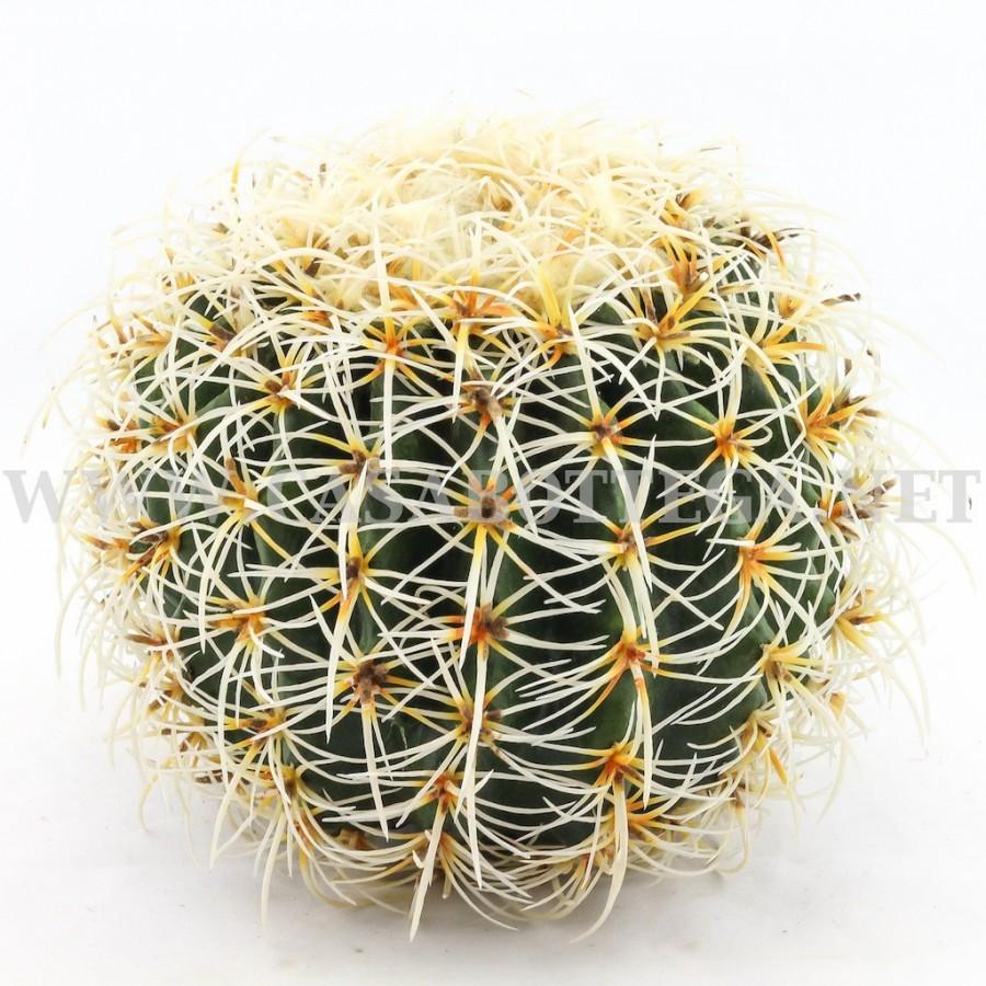 Cactus artificiale fiori finti for Pianta cactus